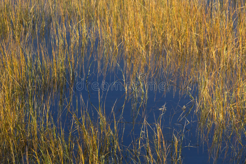 Herzenswärme des Sonnenuntergangs auf Sumpf an Milford-Punkt, Connecticut lizenzfreies stockbild