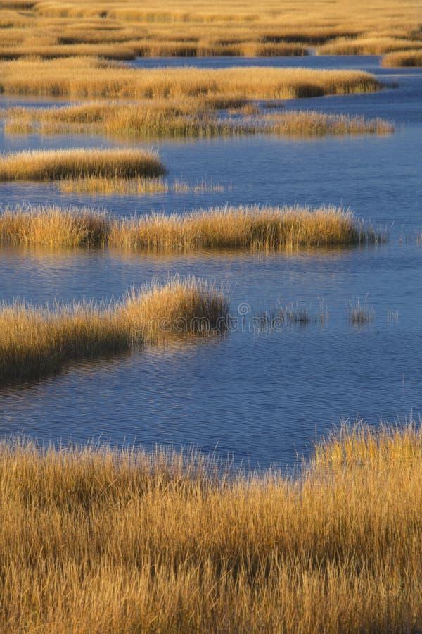 Herzenswärme des Sonnenuntergangs auf Sumpf an Milford-Punkt, Connecticut stockfotografie