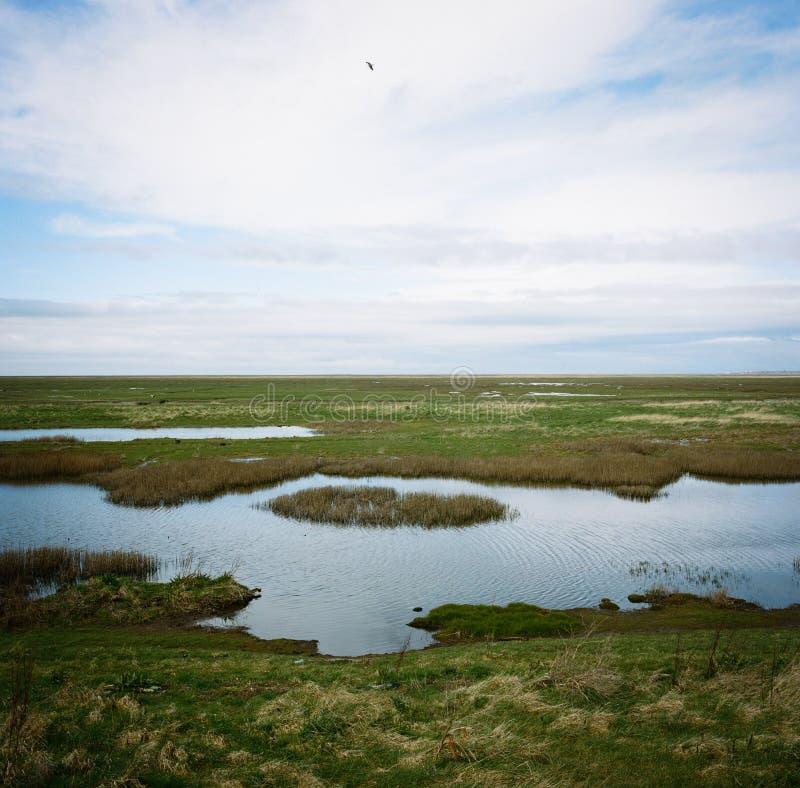 Hesketh沼泽自然保护兰开夏郡英国 库存图片