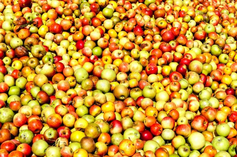 Hessen Tyskland - rik äppleskörd - äpplebakgrund arkivbilder