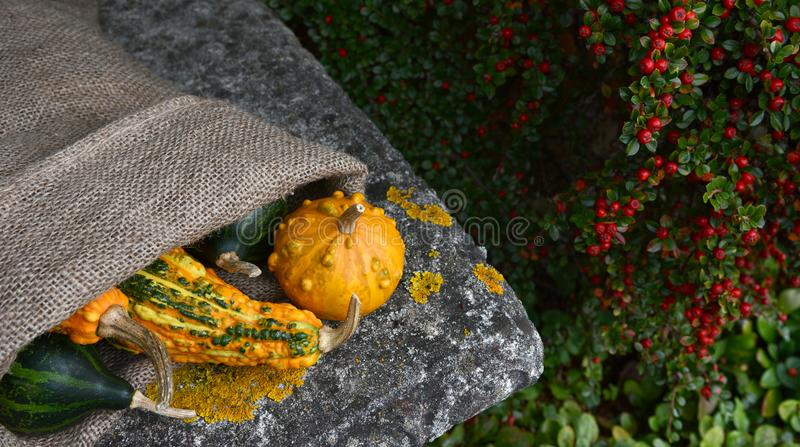 Hessian sack of unusual warty orange and green gourds. On the corner of a stone garden seat royalty free stock photos