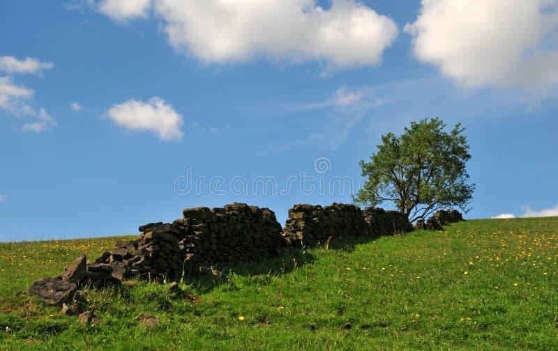 Het één enkele boom groeien bij de bovenkant van een gras behandelde heuvel met gele bloemen met een oude droge steenmuur lancere stock foto