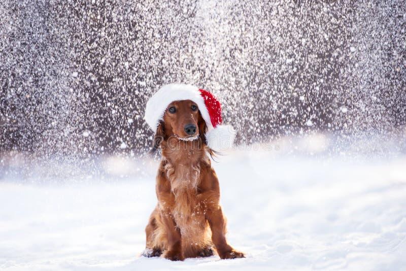 Het aanbiddelijke hond stellen in een santahoed in de winter terwijl het sneeuw royalty-vrije stock afbeeldingen