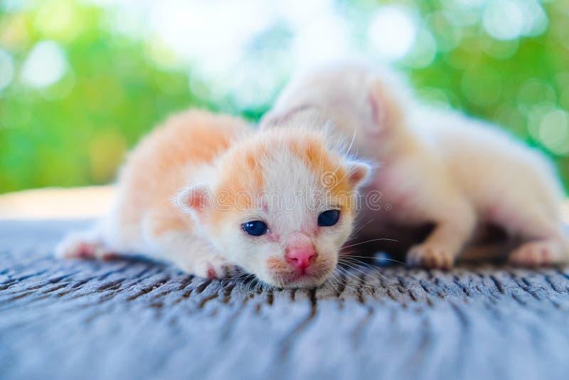 Het aanbiddelijke katje twee liggen royalty-vrije stock afbeeldingen