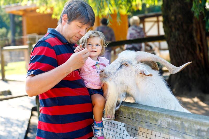 Het aanbiddelijke leuke peutermeisje en de jonge vader die kleine geiten en sheeps op voeden jonge geitjes bewerken Het mooie bab stock afbeeldingen