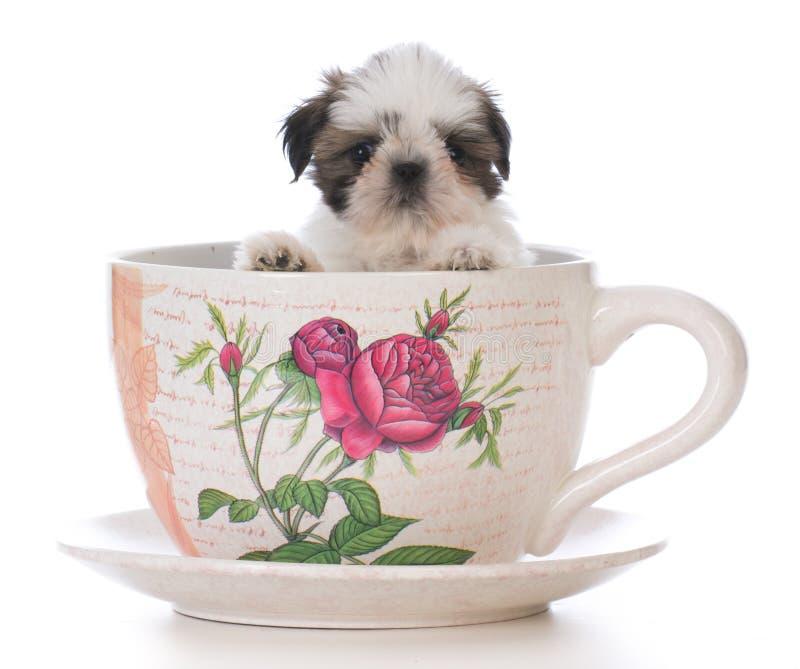 het aanbiddelijke puppy van shihtzu in een theekop stock foto