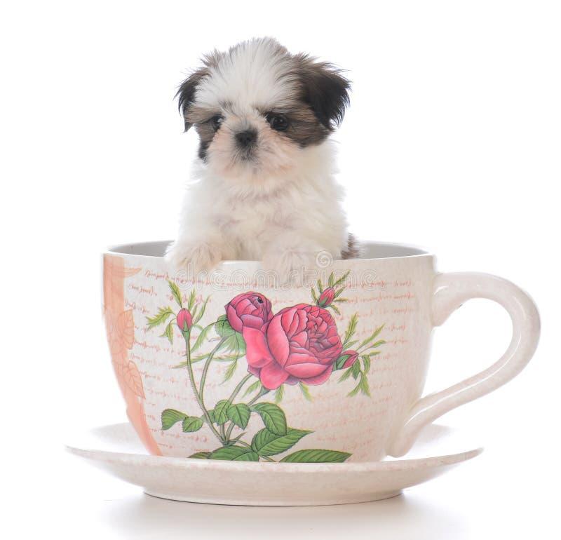 het aanbiddelijke puppy van shihtzu in een theekop stock foto's