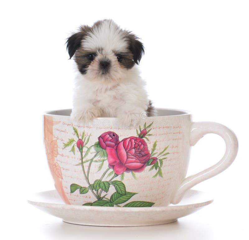 het aanbiddelijke puppy van shihtzu in een theekop royalty-vrije stock afbeeldingen