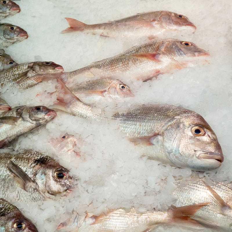 Het aanbieden van verse vissen koelde met verpletterd ijs stock afbeelding