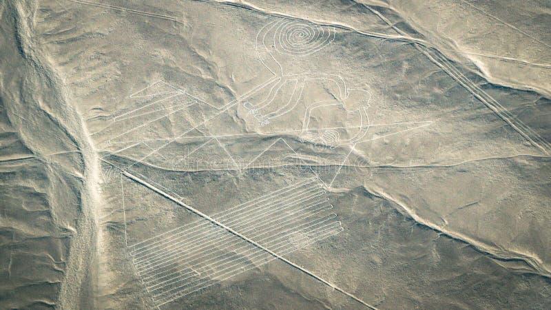 Het Aapcijfer zoals die in de Nasca-Lijnen, Nazca, Peru wordt gezien stock afbeeldingen
