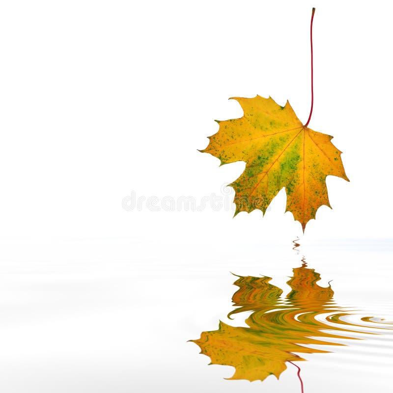Het abstracte Blad van de Esdoorn van de Herfst stock afbeeldingen