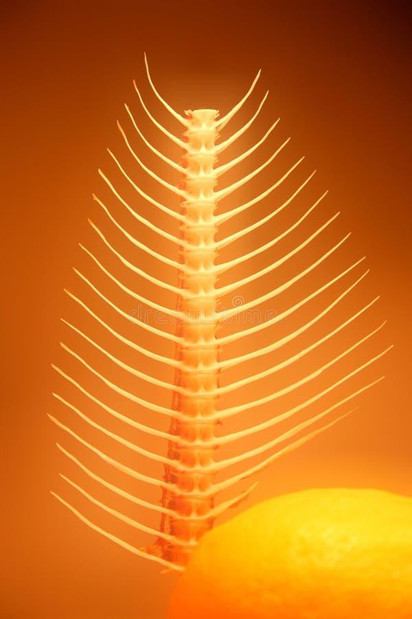 Het abstracte fishbone nog-leven stock fotografie