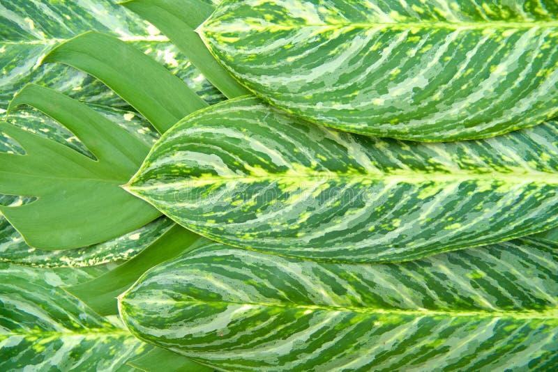 Het abstracte groene textuurconcept stock foto