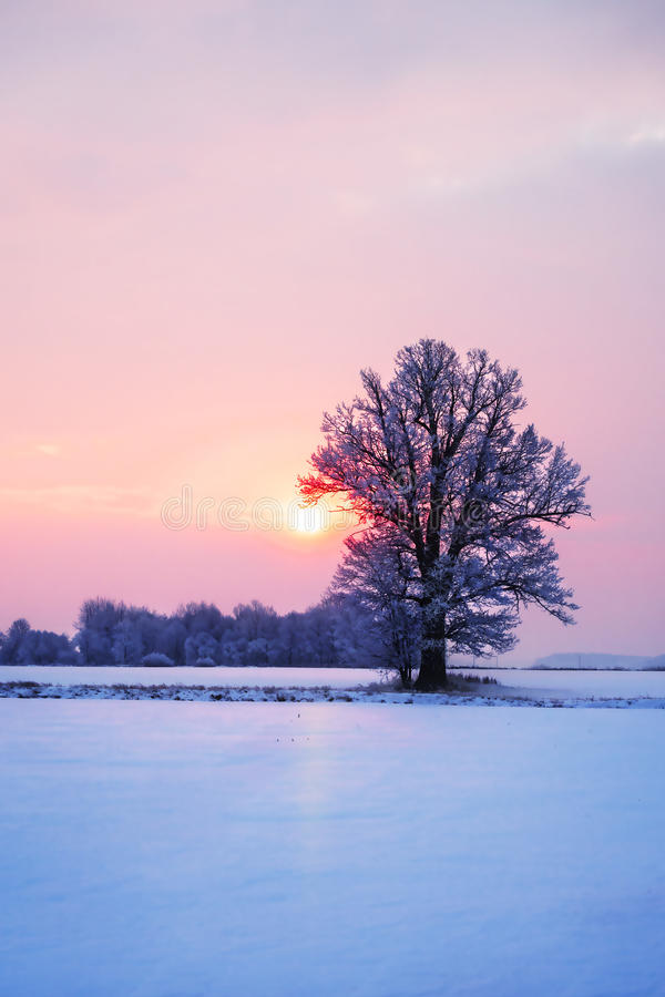Het abstracte landschap van de de winterzonsopgang met een eenzame boom en een kleurrijke hemel stock foto's