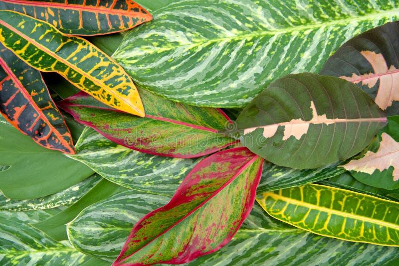 Het abstracte natuurlijke concept van de bladerentextuur stock foto