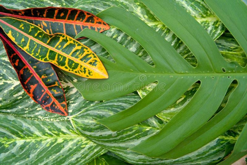 Het abstracte natuurlijke concept van de bladerentextuur stock afbeelding