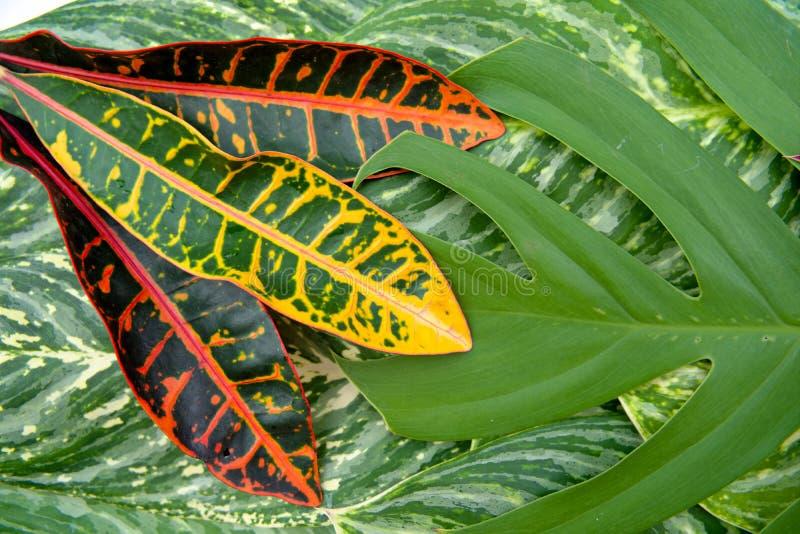 Het abstracte natuurlijke concept van de bladerentextuur royalty-vrije stock fotografie