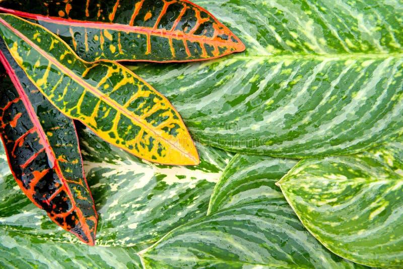 Het abstracte natuurlijke concept van de bladerentextuur stock afbeeldingen