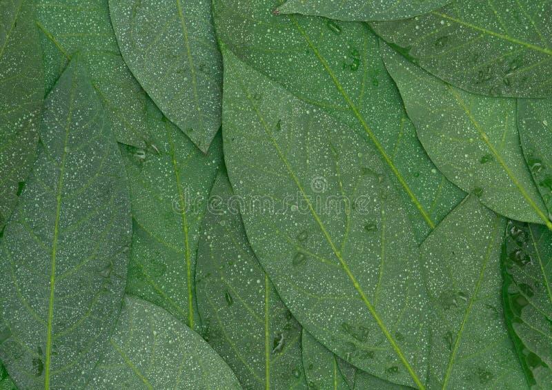 Het achtereind astract achtergrond van avocado groene natte bladeren stock foto's