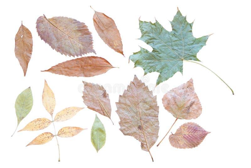 Het achtereind van de herfstbladeren binnen op een schone witte achtergrond stock illustratie
