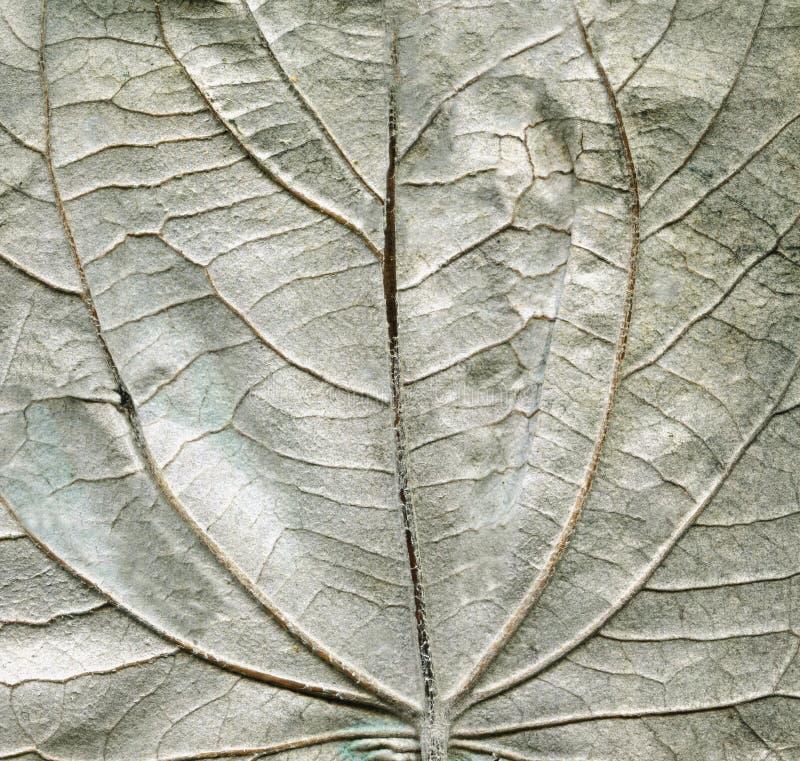 Het achtereindtextuur van het espverlof stock afbeelding