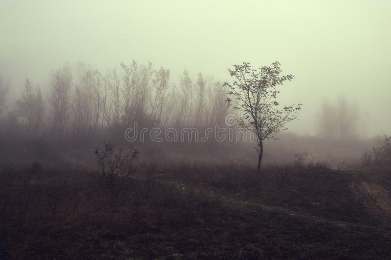 Het achtervolgen van mistig landschap royalty-vrije stock foto