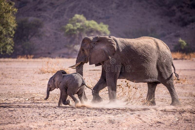 Het achtervolgen van het olifantskind stock afbeeldingen