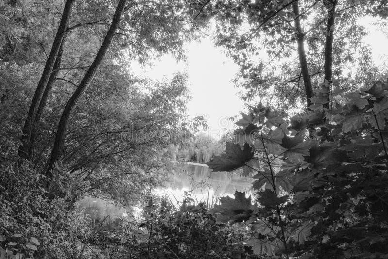 Het achtervolgen van scène van een bos die naast een meer in de wildernis openen stock fotografie