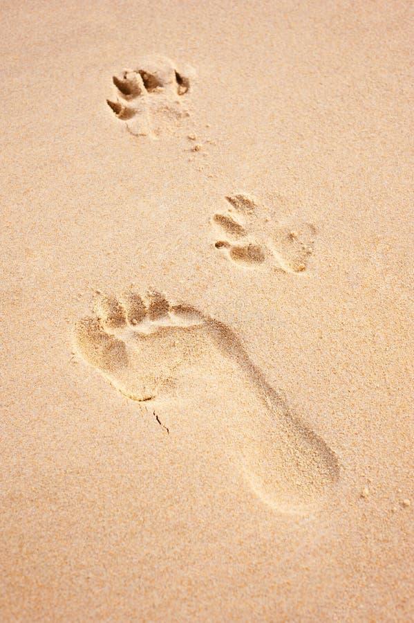 Het af:drukken van de voet en van de poot op strand stock afbeelding