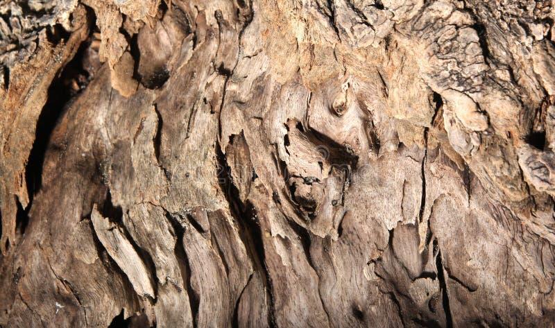 Het afwijkingshout op strand met uitgeput geraakt ziet eruit stock afbeeldingen