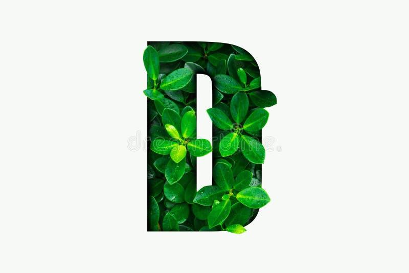 Het alfabet van het aardconcept van groene bladeren in alfabetbrief D royalty-vrije stock foto