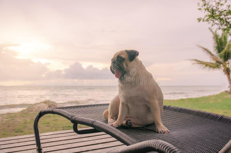 Het alleen leuke pug hondtong droevig plakken uit en zit alleen op ligstoel met de zomeroverzees en het bekijken bewolkte zonsond royalty-vrije stock afbeeldingen
