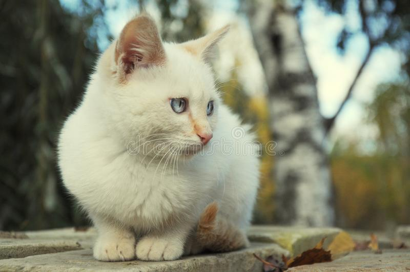 Het alleen rode in openlucht verloren katje van punt blauwe ogen royalty-vrije stock fotografie