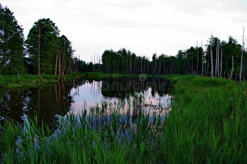 In het alluviale gebied van de Klyazma-rivier royalty-vrije stock afbeelding