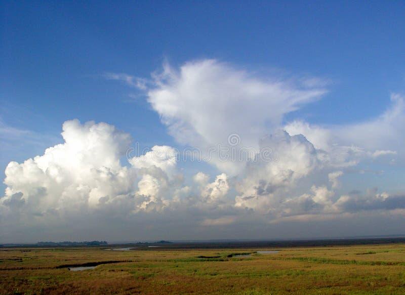 Het alluviale gebied van het Pascagoulastroomgebied royalty-vrije stock foto