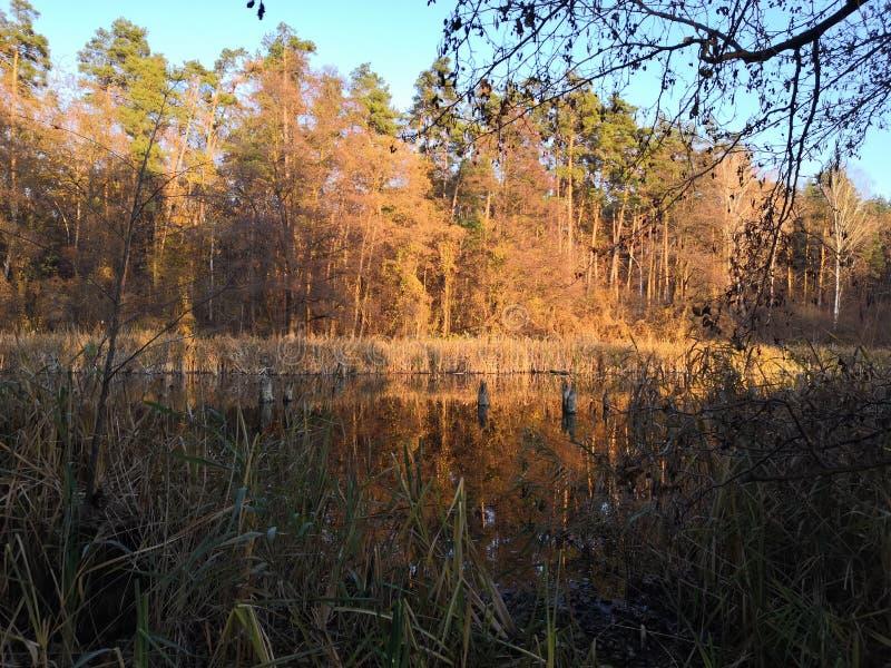 Het alluviale gebied Verrukte Vloed Dnieper royalty-vrije stock afbeeldingen