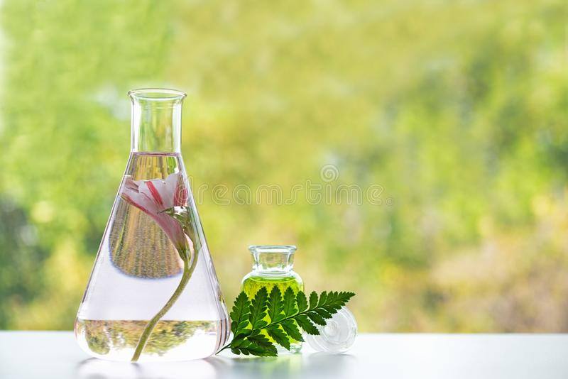 Het analyseren en overlappingsonderzoek voor nieuwe skincare en gezonde zorg voor lichaam Fles etherische oli?n met kruid stock foto