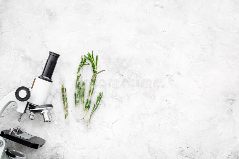 Het analyseren van voedselconcept Gezonde producten Kruidenrozemarijn dichtbij microscoop op de grijze ruimte van het achtergrond stock afbeeldingen