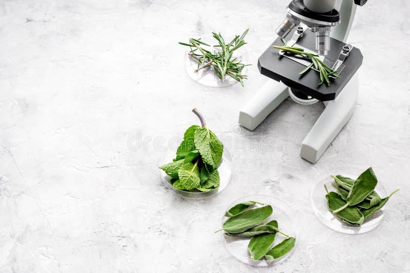 Het analyseren van voedselconcept Gezonde producten Kruidenrozemarijn, munt onder microscoop op grijze achtergrond hoogste mening stock foto