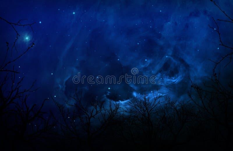 Het angstaanjagende Bos van het Silhouet in de Blauwe Hemel van de Nacht stock foto