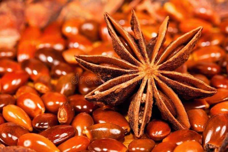 Het anijszaad van de ster met veel zaden rond het royalty-vrije stock fotografie