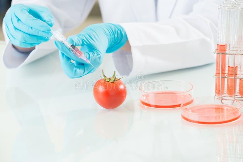 Het antwoord is in deze genetische modificatietomaat stock afbeelding