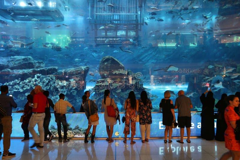 Het Aquarium van Doubai stock foto's