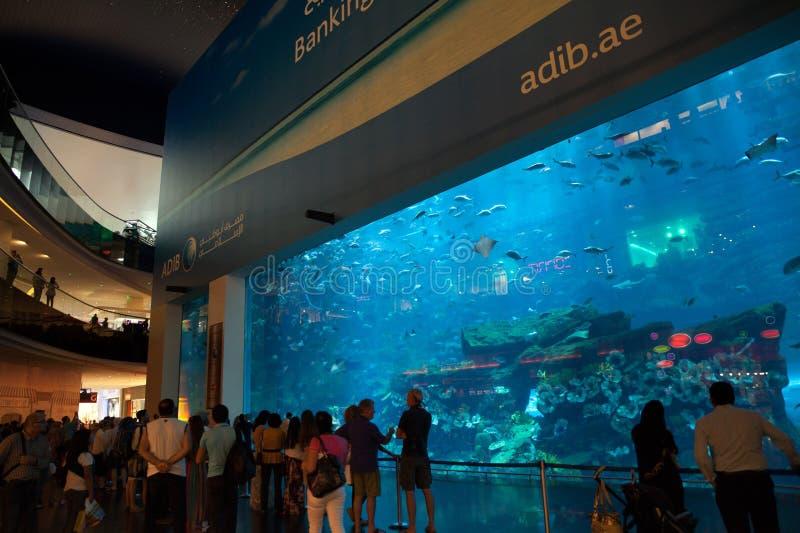 Het Aquarium van Doubai royalty-vrije stock fotografie