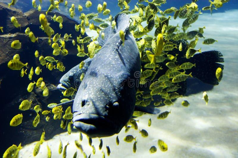 Het aquarium van Georgië stock foto's