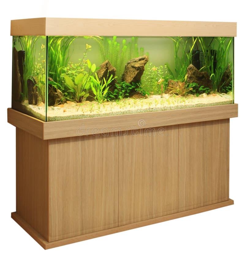 Het aquarium van het huis