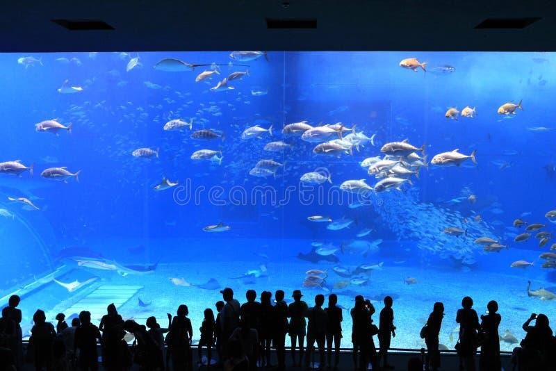 Het Aquarium van Okinawa royalty-vrije stock foto's