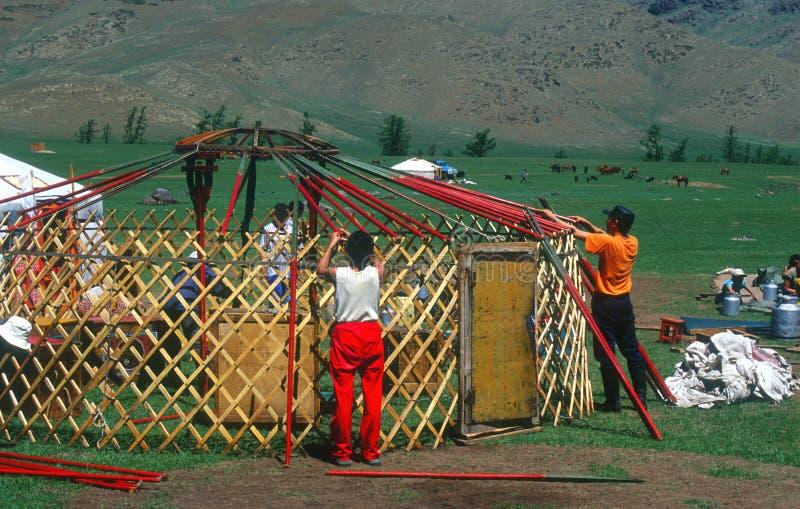 Het assembleren van een yurt, Mongolië stock afbeelding