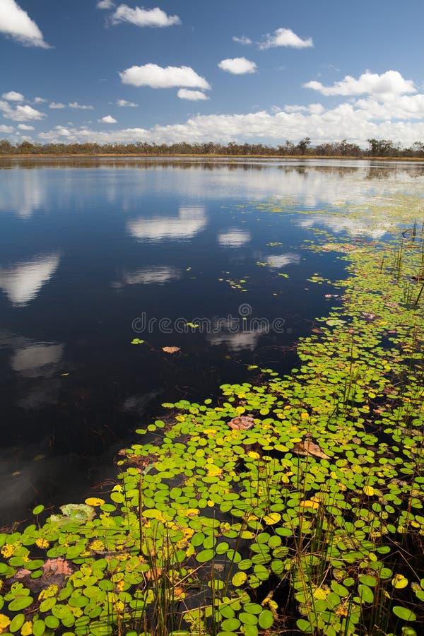 Het Australische moeras van het moerasland billabong royalty-vrije stock foto's
