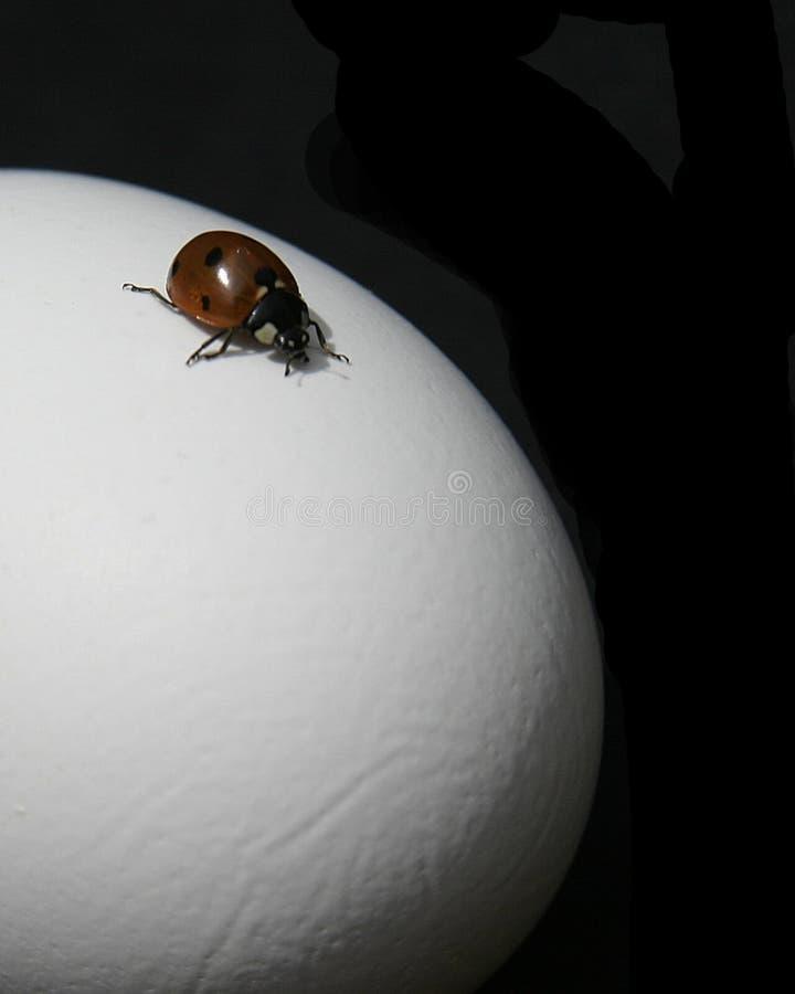Het Avontuur Van Het Lieveheersbeestje Stock Afbeeldingen